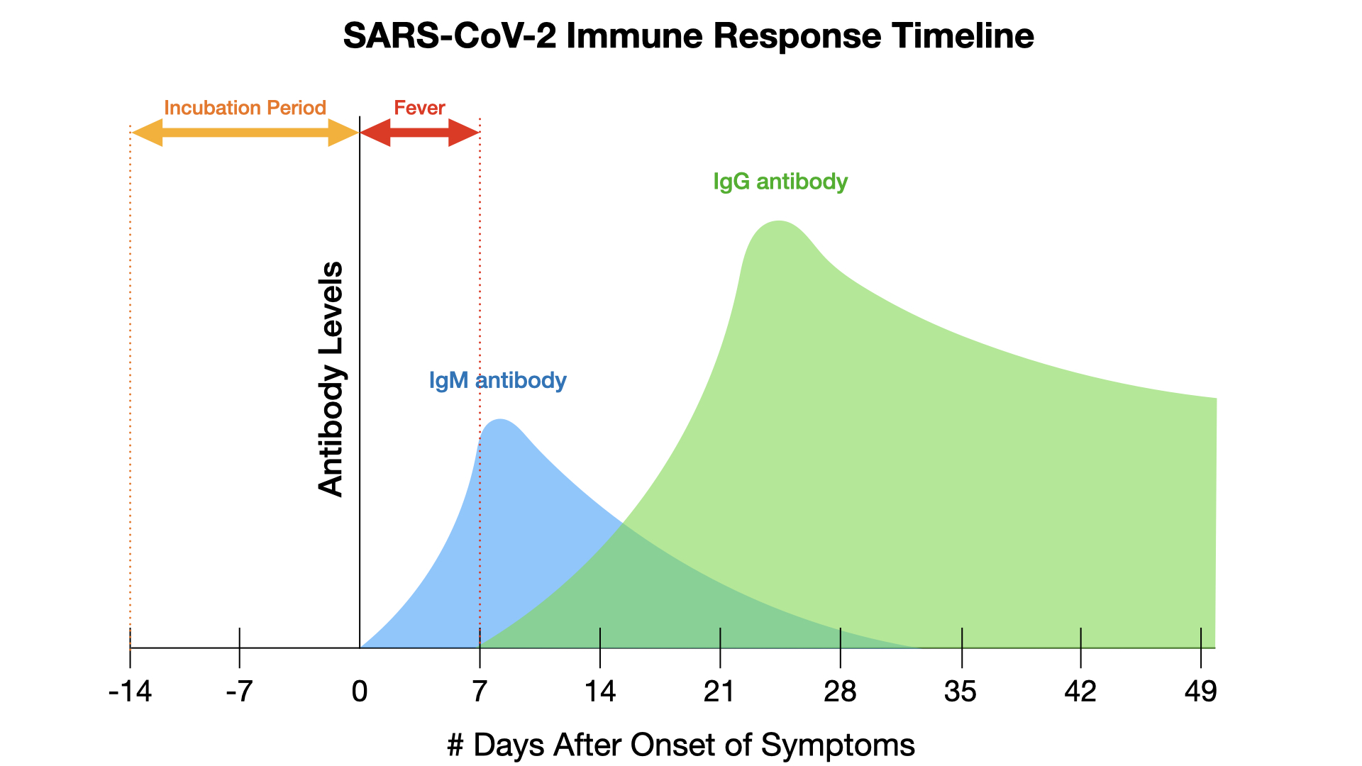 cov-2-immune-response-timeline.001